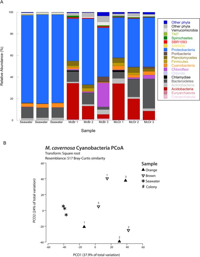 Comparative Genomics of Color Morphs In the Coral