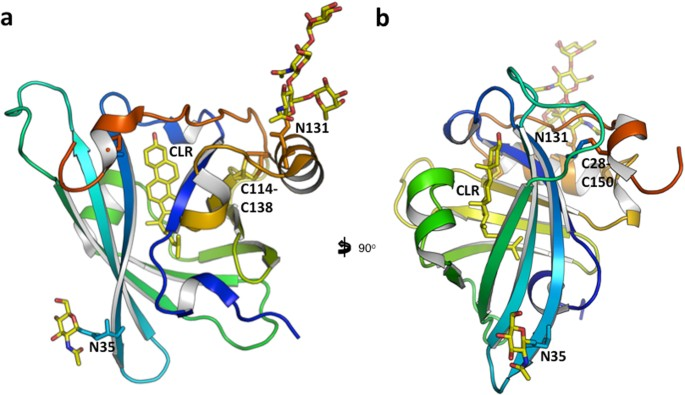Structural Basis Of Cholesterol Binding By A Novel Clade Of Dendritic Cell Modulators From Ticks Scientific Reports