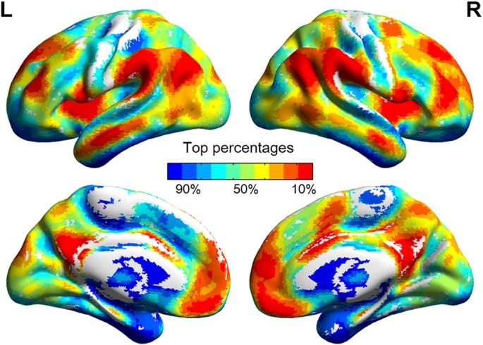 Distinct neural substrates of visuospatial and verbal-analytic reasoni