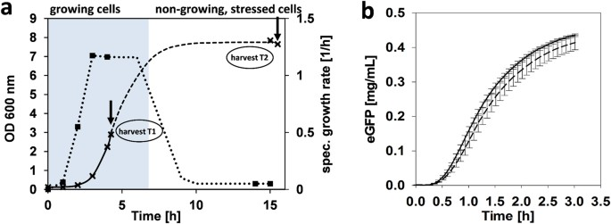 Cell-free protein synthesis from non-growing, stressed