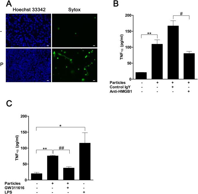 Mineral Particles Stimulate Innate Immunity Through