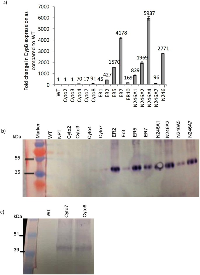 Reducing biomass recalcitrance by heterologous expression of a