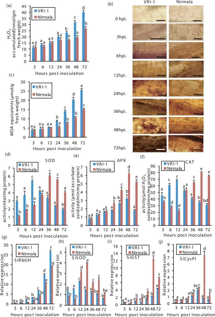 Biotrophy-necrotrophy switch in pathogen evoke differential response