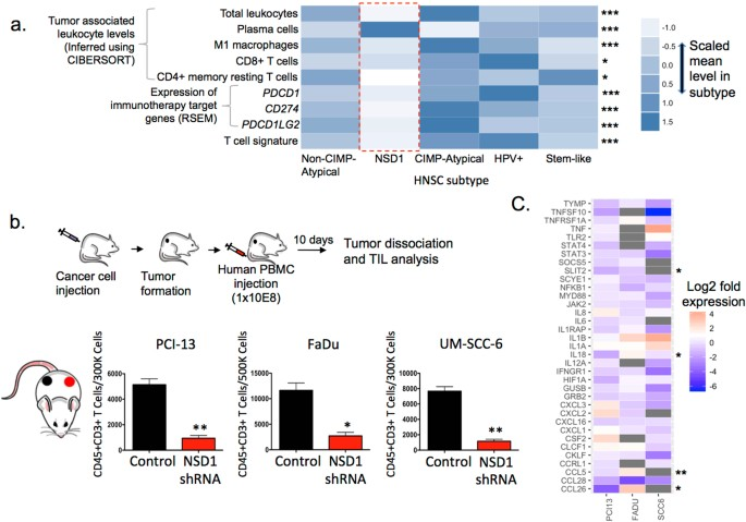 NSD1 inactivation defines an immune cold, DNA hypomethylated