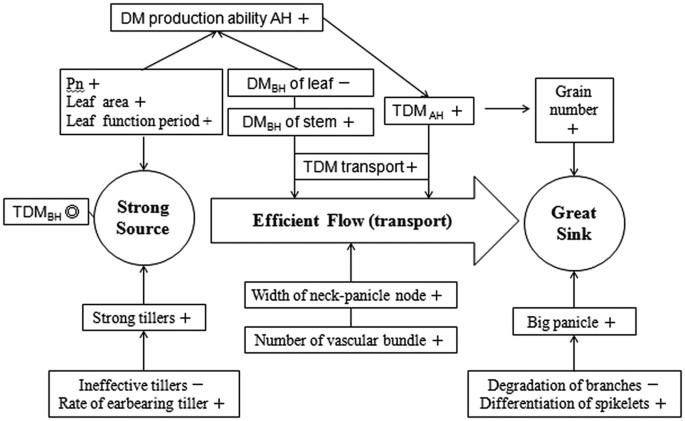 Morphophysiological mechanism of rice yield increase in