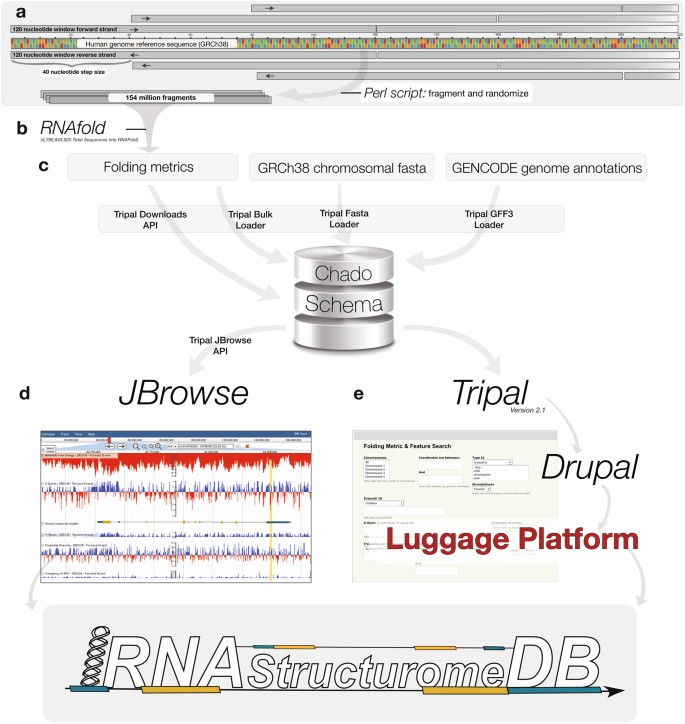 RNAStructuromeDB: A genome-wide database for RNA structural