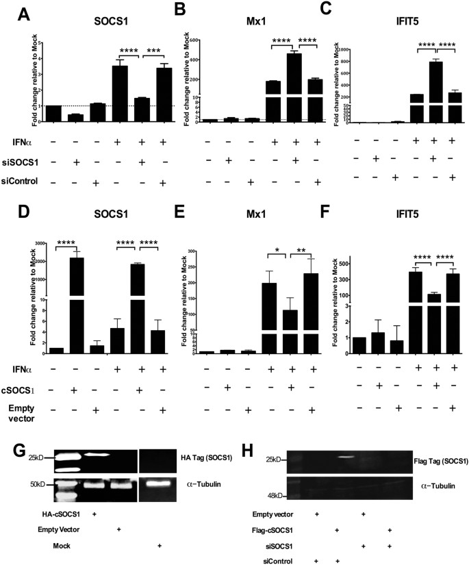 Constitutively elevated levels of SOCS1 suppress innate responses in