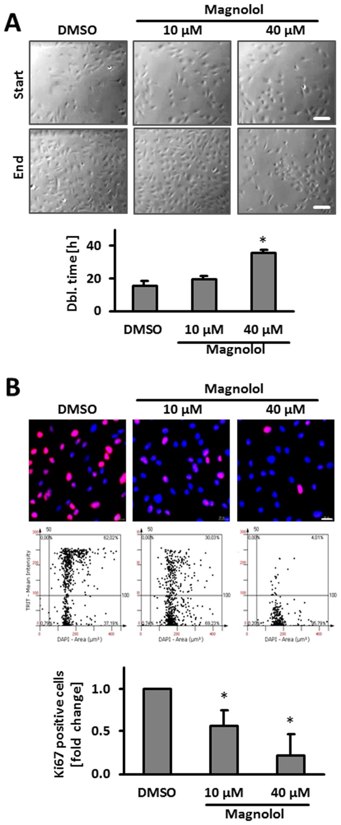 Magnolol inhibits venous remodeling in mice | Scientific Reports