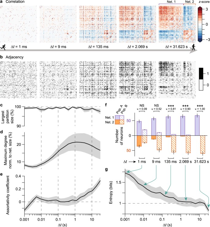 Anti-correlated cortical networks arise from spontaneous