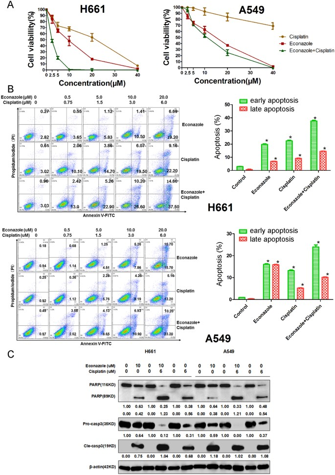 Econazole nitrate inhibits PI3K activity and promotes apoptosis in