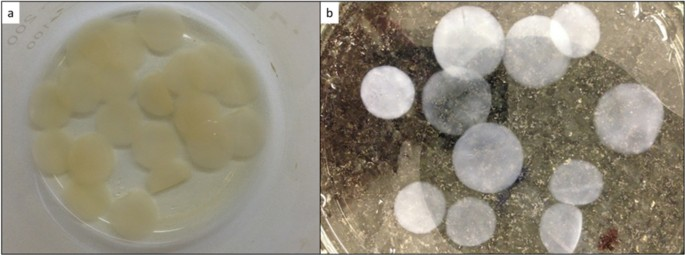 Bacterial Nanocellulose Loaded with Bromelain: Assessment of