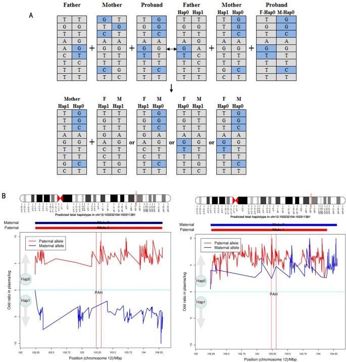 Haplotype-based Noninvasive Prenatal Diagnosis of
