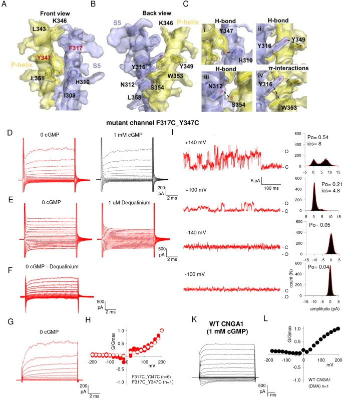 The gating mechanism in cyclic nucleotide-gated ion channels