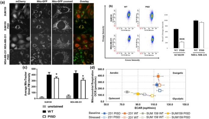 Functional Isolation of Tumor-Initiating Cells using