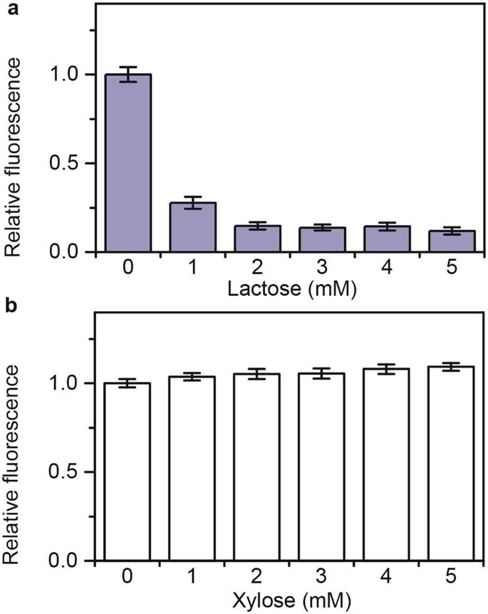 Regulation of metabolism in Escherichia coli during growth