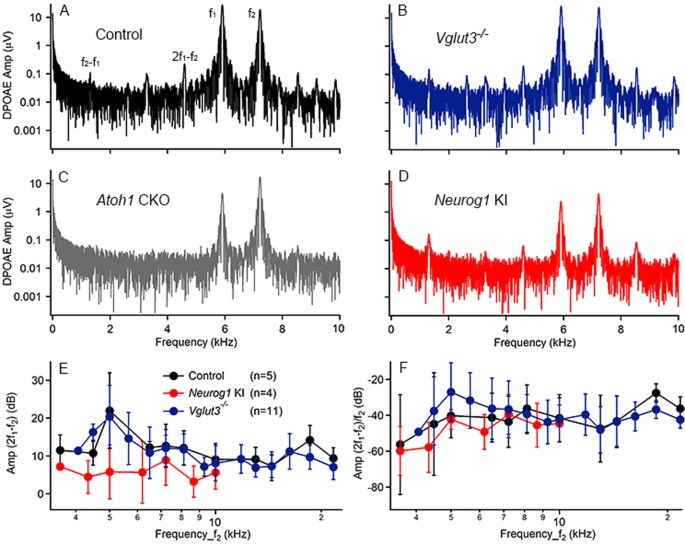 Auditory Neural Activity in Congenitally Deaf Mice Induced by