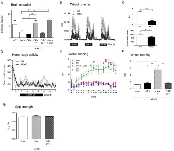 Testosterone boosts physical activity in male mice via dopaminergic