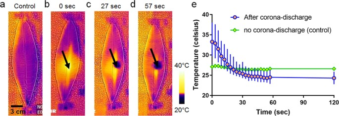 Adhesive Leaf Created by a Corona Discharge | Scientific Reports