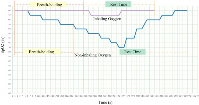 Study of an Oxygen Supply and Oxygen Saturation Monitoring