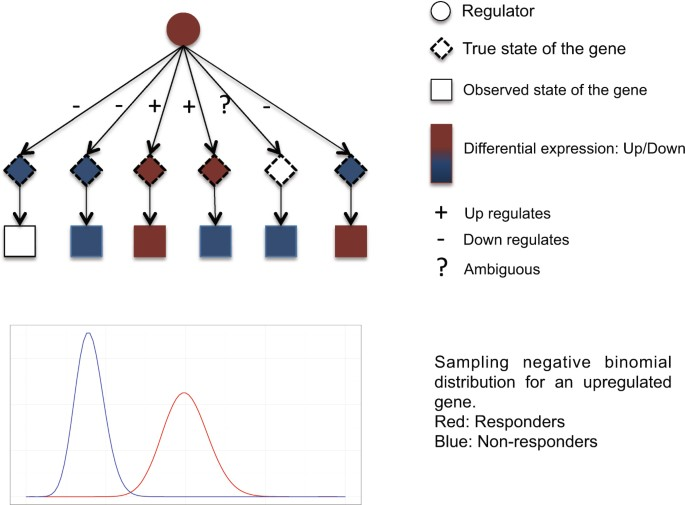 Robust phenotype prediction from gene expression data using