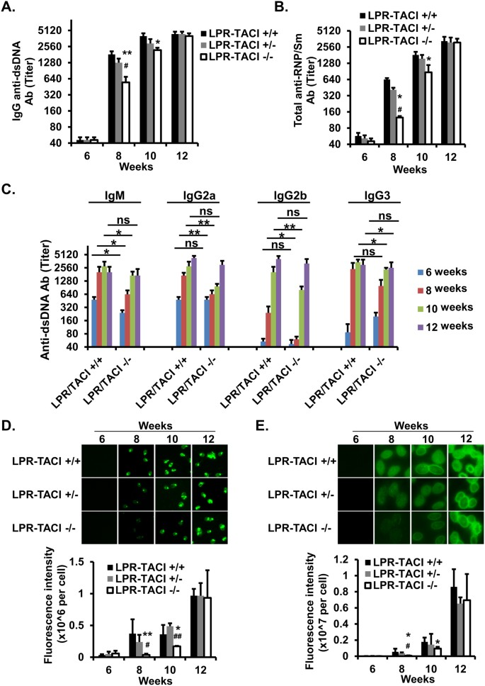 Delayed onset of autoreactive antibody production and M2