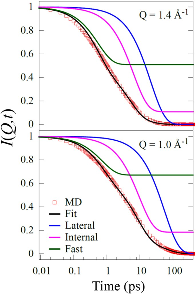Dynamical Transitions and Diffusion Mechanism in DODAB