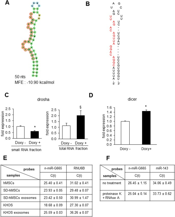 Polycomb group protein Suz12 is regulated by a novel miRNA-like