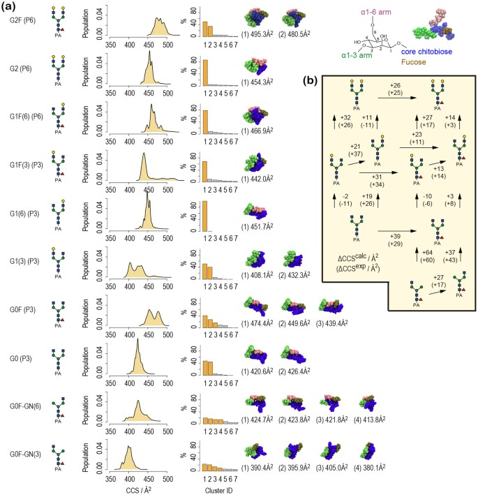 Characterization of Conformational Ensembles of Protonated N-glycans