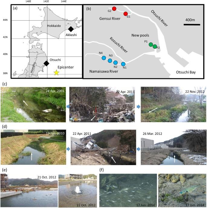 Impact of the huge 2011 Tohoku-oki tsunami on the phenotypes and