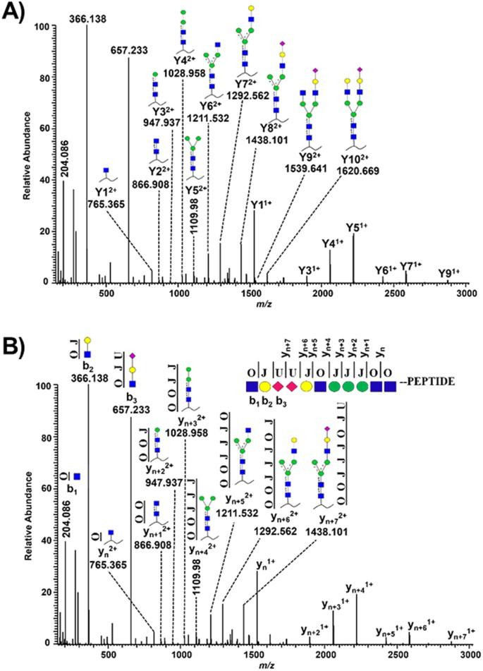 Large-scale intact glycopeptide identification by Mascot database