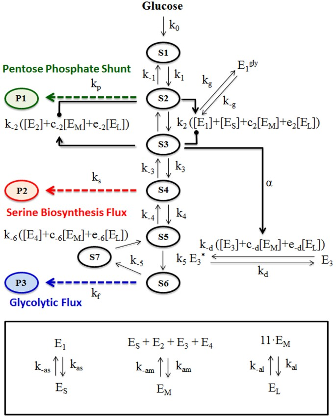 A Mathematical Model for Enzyme Clustering in Glucose