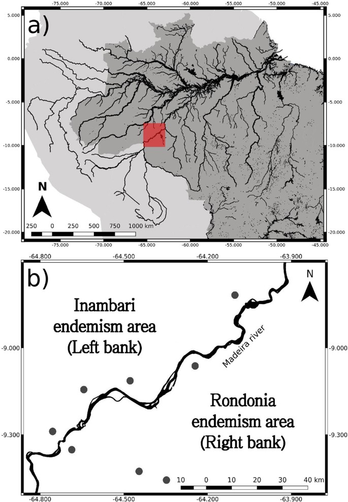 Most species are not limited by an Amazonian river postulated to be