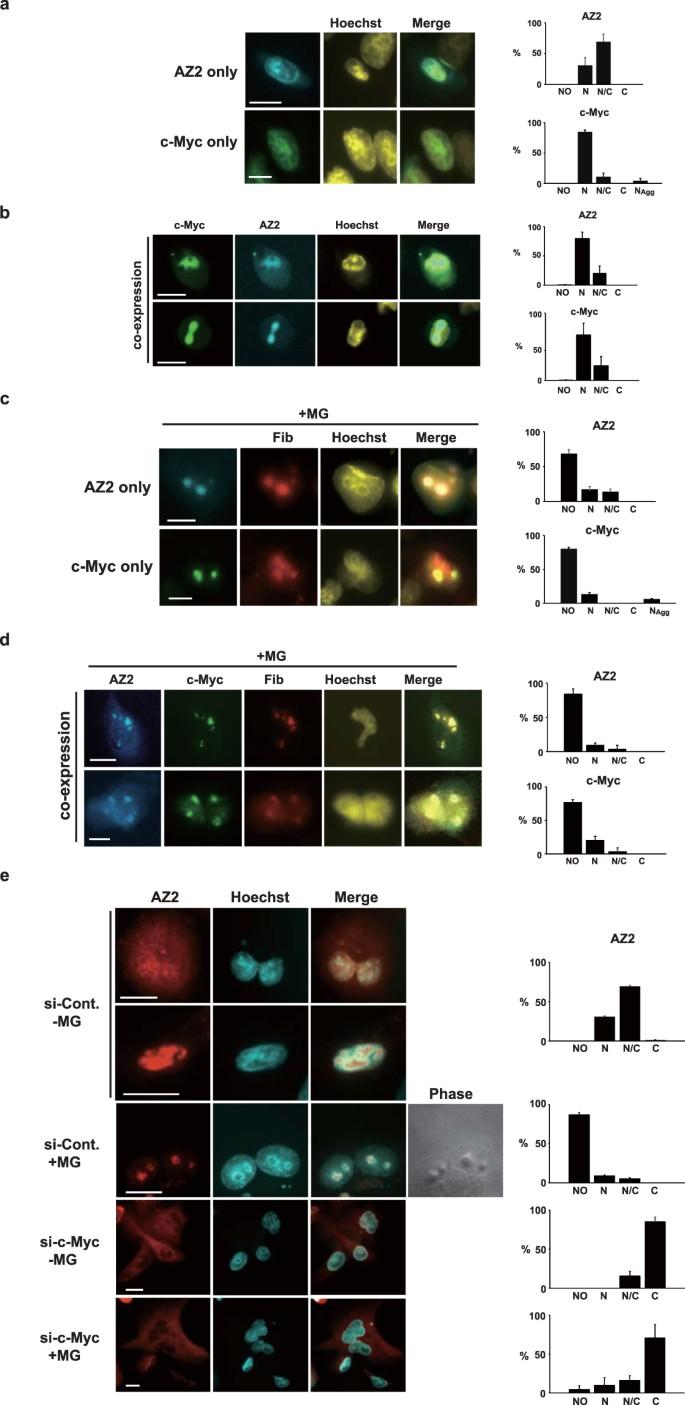 Novel ubiquitin-independent nucleolar c-Myc degradation