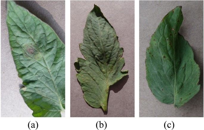 Detection of multi-tomato leaf diseases ( late blight