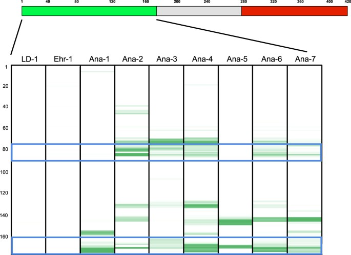 A multiplex serologic platform for diagnosis of tick-borne diseases