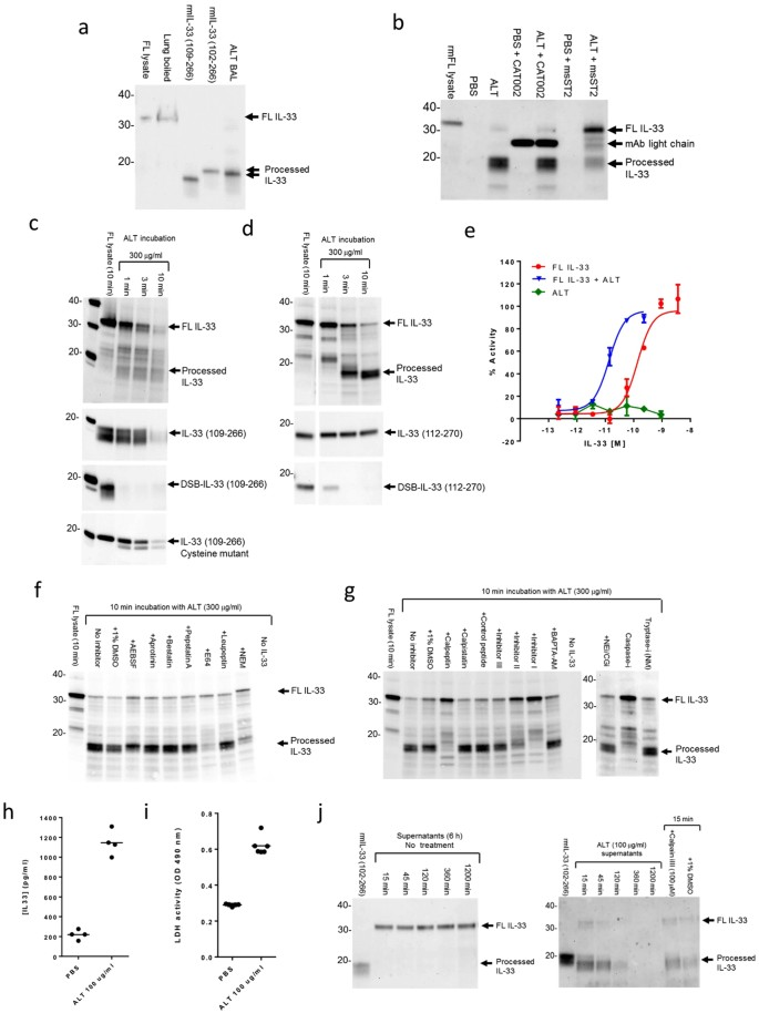 Interleukin-33 is activated by allergen- and necrosis-associated