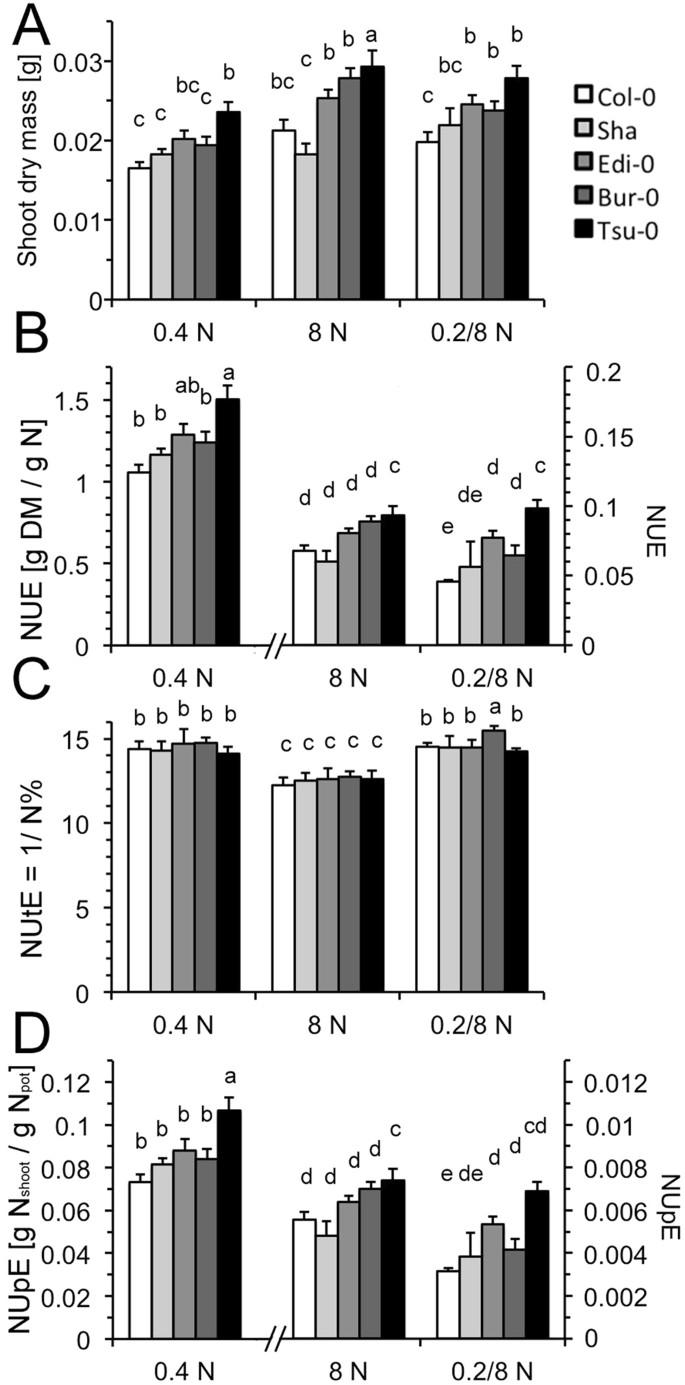 Molecular basis of differential nitrogen use efficiencies