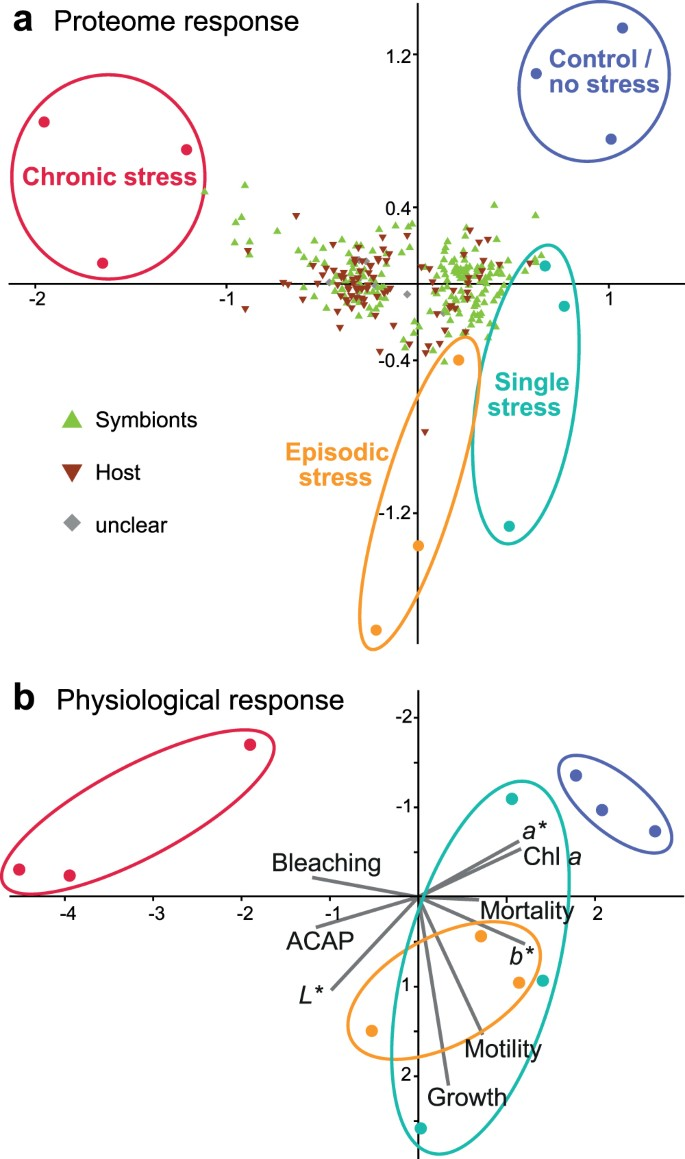 Disentangling thermal stress responses in a reef-calcifier and its
