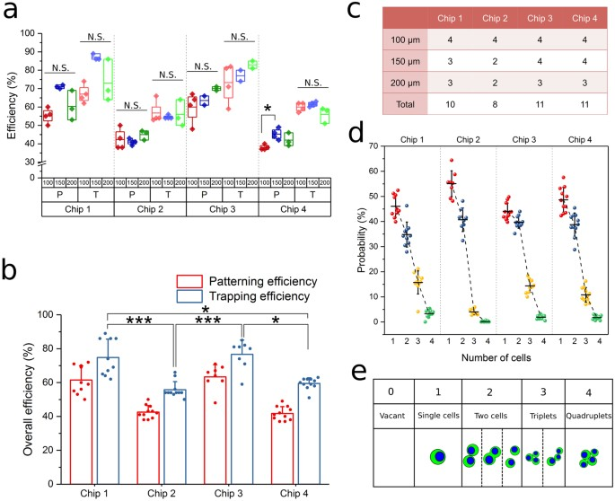 Large-scale patterning of single cells and cell clusters in