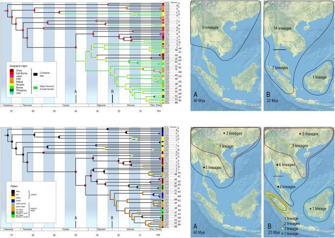 Phylogeny and evolution of Müllerian mimicry in aposematic