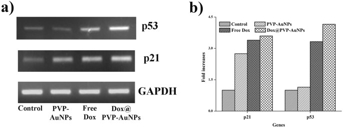 Target delivery of doxorubicin tethered with PVP stabilized