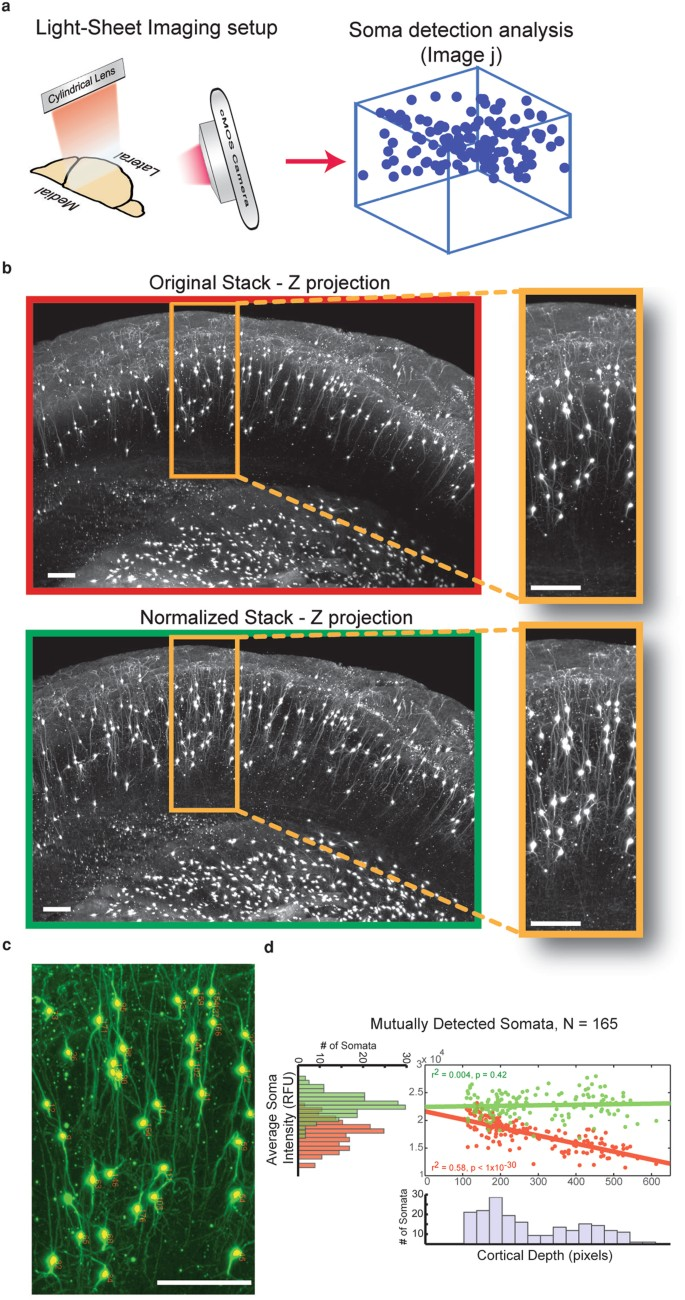 Intensify3D: Normalizing signal intensity in large heterogenic image