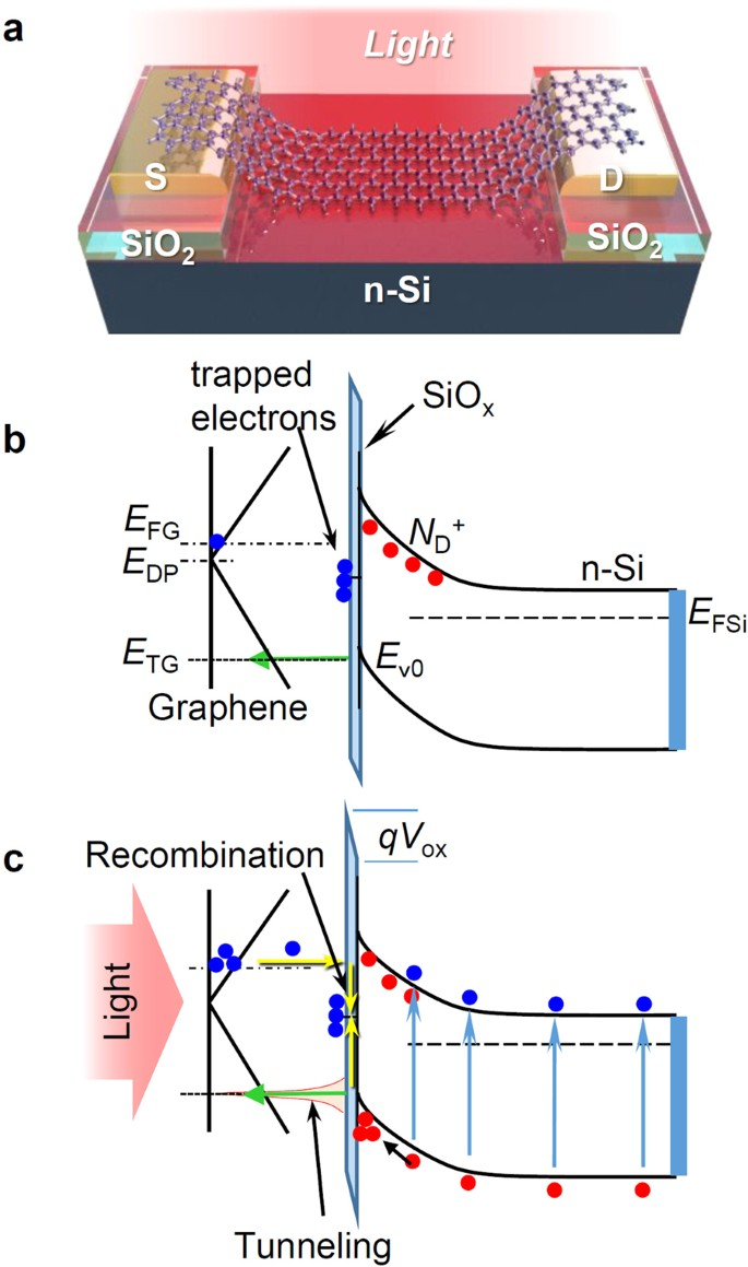 Photoresponse of graphene field effect transistor with n type Si ...