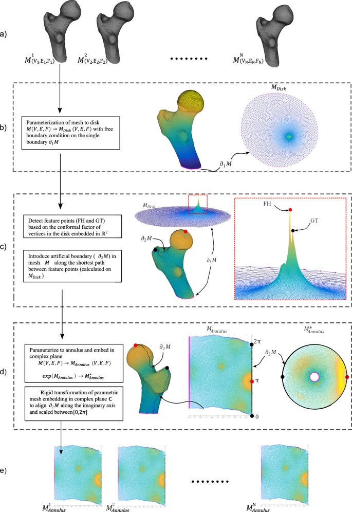 Ricci-flow based conformal mapping of the proximal femur to identify