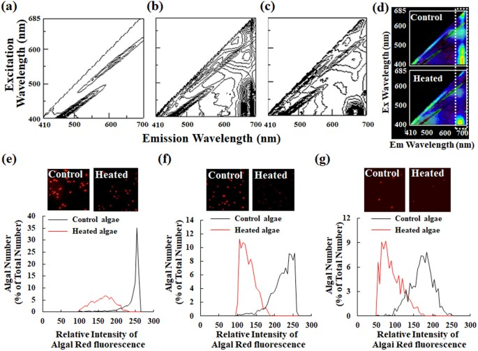 Applicability of Automated Cell Counter with a Chlorophyll