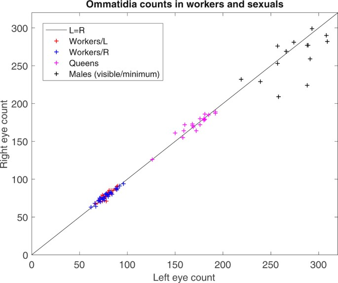 Asymmetric ommatidia count and behavioural lateralization in the ant