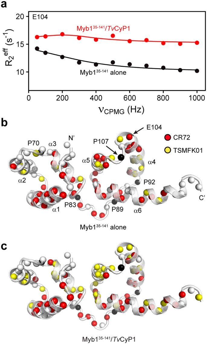 Structural basis of interaction between dimeric cyclophilin