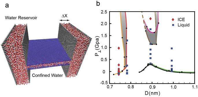 (a) snapshot of the system employed to study water confined by graphene  sheets at constant chemical potential, i e , where confined water is in  contact with
