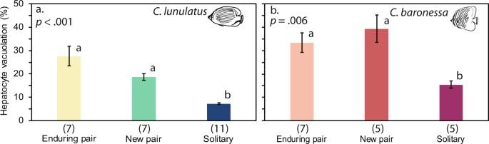 Pair bond endurance promotes cooperative food defense and