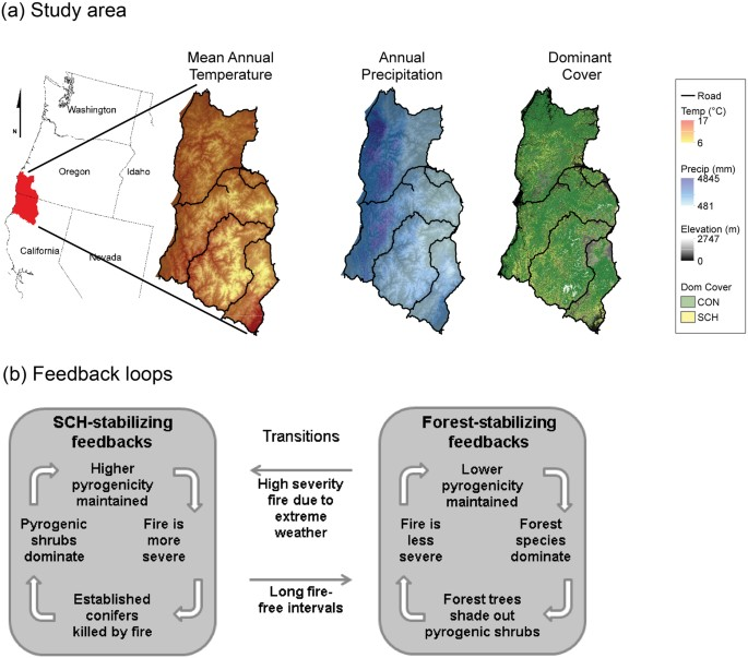 Disequilibrium of fire-prone forests sets the stage for a rapid declin